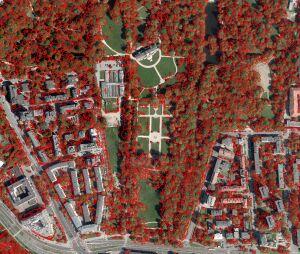 Powstanie Mapa Koron Drzew. Na początek Śródmieście i Mokotów