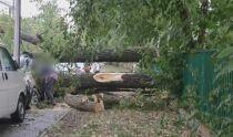 Nawałnica przeszła przez stolicę: powalone drzewa, uszkodzone auta