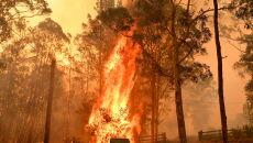 Pożary w Nowej Południowej Walii (PAP/EPA/MICK TSIKAS)