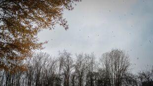 Pogoda na dzień: pochmurno, maksymalnie 10 stopni