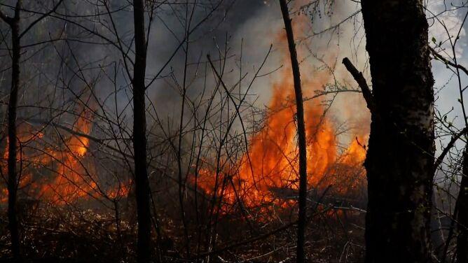 Kolejne pożary lasów i traw. <br />Kora drzew jest jak węgiel